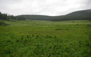 Что такое земельный пай — выделение, оформление, способы использования
