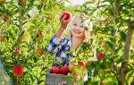 Как открыть фермерское хозяйство — необходимые документы