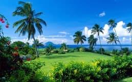 Гражданство Сент Китс и Невис: способы получения