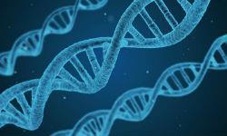 В каких случаях назначается и проводится ДНК-экспертиза
