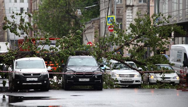 Дерево упало на машина компании должен ли возмещать ущерб водитель