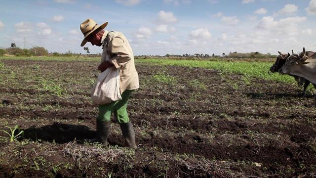 Как открыть фермерское хозяйство - необходимые документы